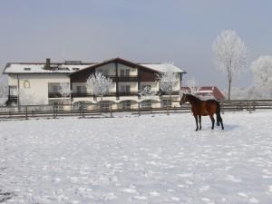 Gästehaus im Schnee mit Pferd
